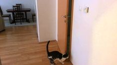 Cat Opens Five Doors To Go Outside. I usually am not a fan of cats but this is like the scariest part in Jurassic Park, when the raptor opens the door!