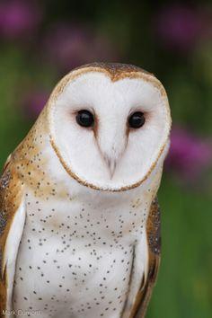 Gotta Love Them, Owls!
