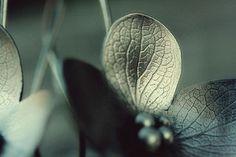 Hydrangea Earrings | by Carin Jones - Jonesing for Jewelry