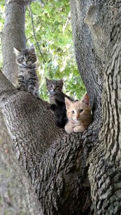 Cute Cats And Kittens, I Love Cats, Crazy Cats, Kittens Cutest, Pretty Cats, Beautiful Cats, Animals Beautiful, House Beautiful, Cute Baby Animals