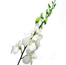 Orchid - Dendrobium White - 70 Stems Sam's. $139.68