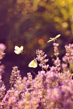 lavender-colored glasses...