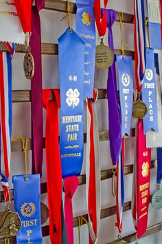 Medal Display Diy Trophy, Trophy Display, Award Display, Man Cave Diy, Man Cave Gifts, Ribbon Display, Dog Competitions, Belt Storage, Medal Holders