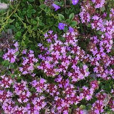 Herbs Pictures and Names | Herbs on Thyme - Herbs and Landscaping specialists