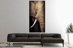 Obraz ELEPHANT II Tableau Design, H Design, Sofa, Couch, Elephant, Interior, Painting, Furniture, Home Decor