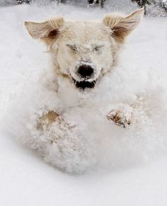 20 Animals Who Are Going Bonkers Over Snowstorm Niko