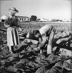 Cenas da Vida Rural. Vila Real de Stº António, Algarve. 1956.