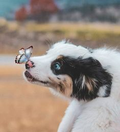 Things that make you go AWW! Like puppies, bunnies, babies, and so on. A place for really cute pictures and videos! Cute Baby Dogs, Cute Dogs And Puppies, Doggies, Puppies Puppies, Adorable Puppies, Cute Little Animals, Cute Funny Animals, Funny Cats, Beautiful Dogs