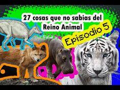 27 cosas que no sabias del (Reino Animal), Episodio 5.   #ElCondorMilenario,  #Curiosidades, #CosasQueNoSabias, #CosasDeLosAnimales, #Aves, #Animales, #Peses, #Fauna, #PlanetaTierra, #ElMundo, #Insectos, #Flora, #MundoCurioso, #CosasQueNoSabiasDeLosAnimales, #TodoSobreLosAnimales, #ReinoAnimal #MundoSalvaje,  #27CosasQueNoSabias, #27CosasQueDesconocías,