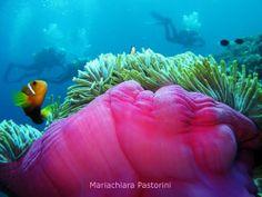 """Mariachiara Pastorini  """"...perché esiste anche il turismo """"profondo""""!""""  Atollo di Suvadiva (Maldive) - 2011"""