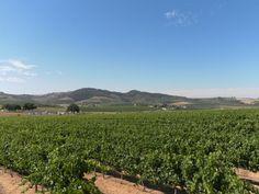 Wijnroute in Zuid-Afrika South Africa, Vineyard, Travel, Outdoor, Seeds, Outdoors, Viajes, Vine Yard, Destinations