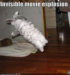hilarious. http://www.buzzfeed.com/bizzybee712/the-best-invisible-lolcat-pictures-k16