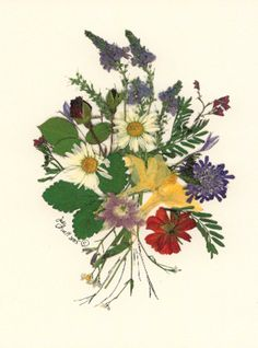 Pressed Flower Designs | Posy with Daisies' Pressed Flower Design by QuilliGraphy