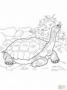 Tortoise Coloring page   Inkleur   Turtle coloring pages ...
