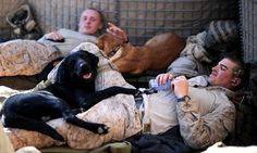 """""""So love that these little guys keep our men sane and at times warm. Nothing like a dog to make you forget a crappy day!"""""""