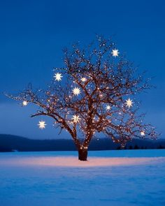 Lights Fantastic  The night sky's beauty wraps around bare winter branches to stunning effect. Try using strands of lights with different-si...