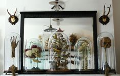 """In his living room, Cohn keeps this """"Mantel of Domes"""" with taxidermied birds, skulls, and a mummified hand in Victorian-style bell jars to evoke the wonder of a science museum. Photo by Sergio Royzen. Cabinet Of Curiosities, Natural Curiosities, The Bell Jar, Bell Jars, Glass Domes, First Home, Decoration, Interior Inspiration, Sweet Home"""