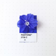 Pantone 2726 color match. Georgia Blue flower from the front yard.