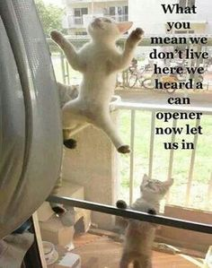 What you mean we don't live here we heard a can opener now let us in