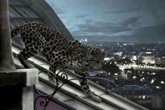 Imagen de http://www.cpp-luxury.com/wp-content/uploads/2013/08/L%E2%80%99Odyss%C3%A9e-de-Cartier-short-movie.jpg.