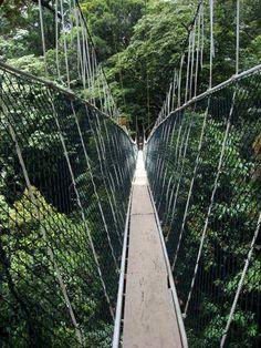 'Taman Negara' DIY plan