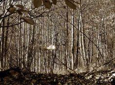 19.sensazioni d'inverno | Sensazioni d'inverno | Roberto Russo | Scrivere e pubblicare gratis online poesie, racconti, condividere fotografie e grafica - Sito e blog Rosso Venexiano -