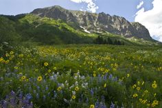 The 10 Best Summer Festivals of 2012: Crested Butte Wildflower Festival in Colorado, July 9-15.