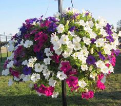 A personal favorite from my Etsy shop https://www.etsy.com/listing/280466904/100-hanging-petunia-flower-seed-sowing