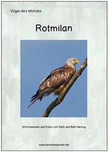 Free: Vogel des Monats: Rotmilan