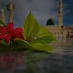 Best Love Songs, Good Vibe Songs, Best Love Lyrics, Quran Quotes Love, Islamic Love Quotes, Islamic Inspirational Quotes, Islamic Images, Islamic Videos, Islamic Pictures