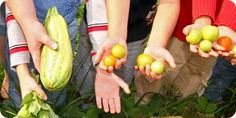 Kids harvesting vegetables curriculum website==ideas for classroom