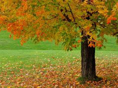 Seasons HD Wallpapers 05