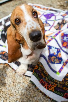 Charly & Ben's Crafty Corner: Pets on Quilts 2014