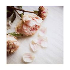 Tumblr Tuesday The vintage rose Secrets of a Butterfly ❤ liked on Polyvore featuring backgrounds, pictures, photos, flowers and fillers