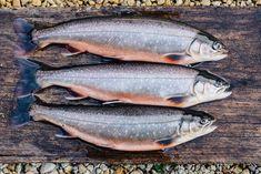 Unsere Bio-Seesaiblinge von den fischbauern Meat, Food, Farmers, Pisces, Foods, Essen, Meals, Yemek, Eten