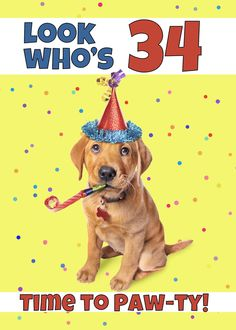 Happy Birthday Cute Puppy in Party Hat Humor card , Happy 35th Birthday, Happy 30th, Happy Birthdays, Hat, Humor, Template, Flyers, Layout, Vectors