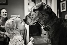 great dane with little girl... friendship