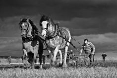 Scottish Ploughing Championships 2011 (from Buiach/ Colin Campbell on flickr)
