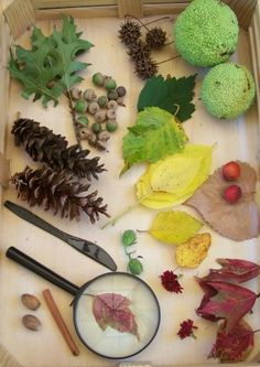 {Creating a Fall Nature Tray}  simple ideas for encouraging kids to explore science & nature in Autumn