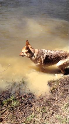 ORIGINAL PINNER COMMENT This has to be the funniest and cutest thing ever! German Shepherd throws a fit when she has to quit swimming ✿⊱╮ Love My Dog, Pet Dogs, Dogs And Puppies, Dog Cat, Doggies, Animals And Pets, Funny Animals, Cute Animals, Funny Dog Videos