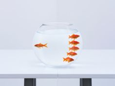 View top-quality stock photos of Goldfish Separating From Crowd In Fishbowl. Edward Snowden, Rosa Parks, Stuff To Do, Things To Do, Tips To Be Happy, True Happiness, Goldfish, Wine Glass, Inspiration