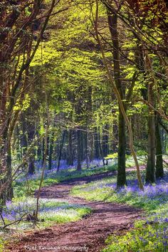 An Irish Bluebell Wood by Frank  Kavanagh, via 500px - Co. Laois, Ireland.
