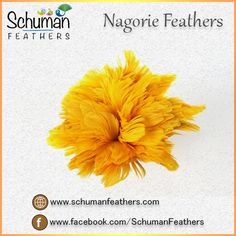 #schumanfeathers offers #NagorieFeathers in yellow shade for attractive headband decoration http://www.schumanfeathers.com/nagories