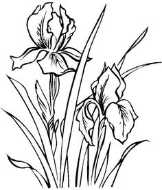 coloring sheets iris flowers free printable for little kids