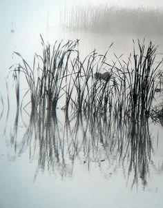 grass in the mist