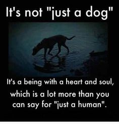 """So true. I HATE it when people say that to me. My dog has been there for me & far more kind to me than most """"humans"""". Some people are just so heartless."""