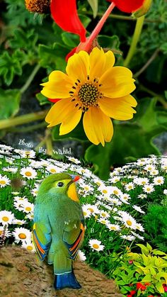 Science Discover & has made everything beautiful in its time& - Eccl. All Birds Cute Birds Pretty Birds Beautiful Birds Animals Beautiful Exotic Birds Colorful Birds Nature Pictures Bird Art All Birds, Cute Birds, Pretty Birds, Beautiful Birds, Animals Beautiful, Exotic Birds, Colorful Birds, Nature Pictures, Bird Art