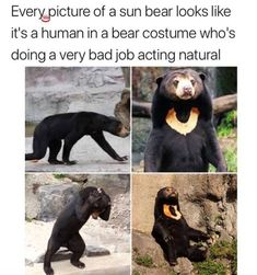 What even is this animal? Its a bear but looks just enough not like a bear...