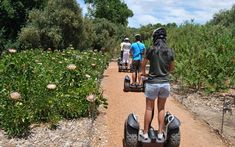 Tour the vineyards on a Segway PT (Personal Transporter), the most fun two-wheeled way to see the Spier farm. Activities In Cape Town, Segway Pt, Stuff To Do, Things To Do, Shady Tree, Social Club, Places Of Interest, The Great Outdoors, Just Go