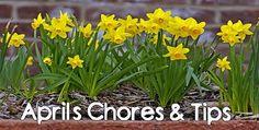 April's Chores & Tips! #landscaping #gardening